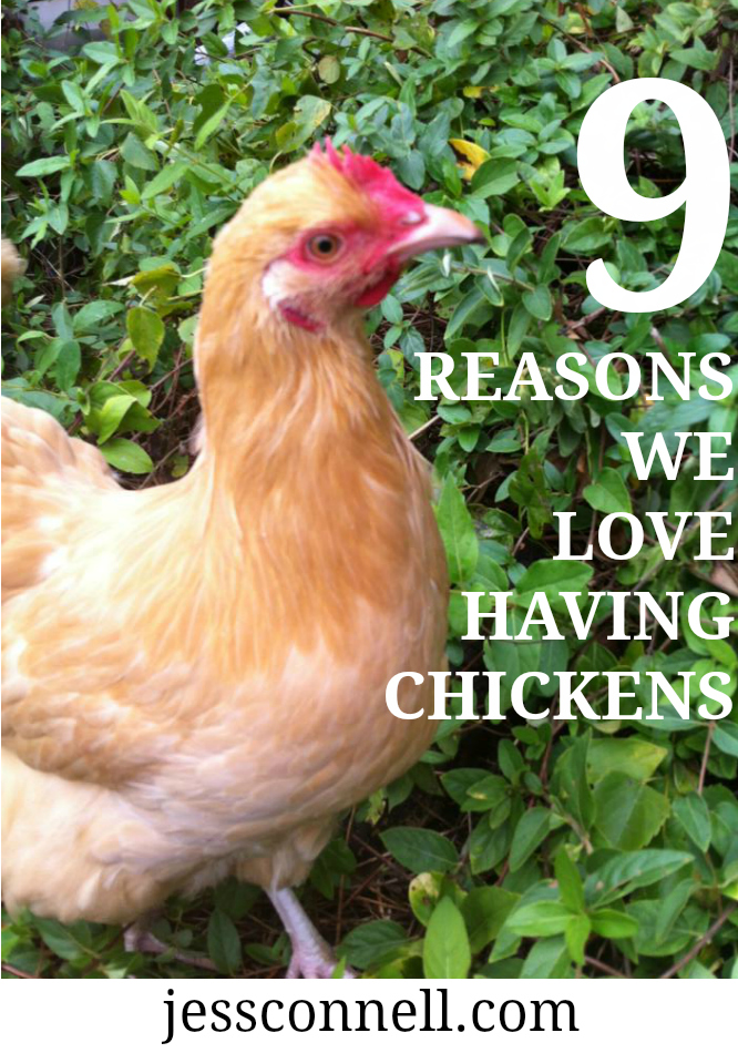 9_reason_to_have_chickens